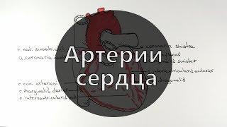 Умный Медик [УМ] - Артерии сердца | Строение сердца