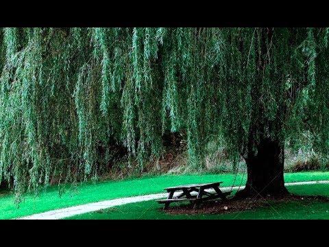 【本当にあった怖い話】「柳の木の下にいる白装束姿の女」