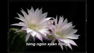 Ru Em Tung Ngon Xuan Nong Trinh Cong Son Quang Dung karaoke
