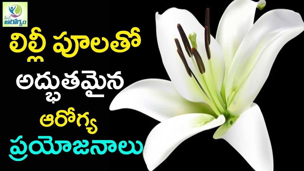 Lily Flowers Medicinal Properties Benefits Of The Plant Mana