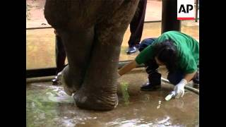 Elephant treated after stepping on mine along Thai-Myanmar border