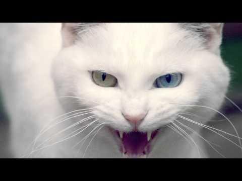 Angry Cat - Ringtone Mp3