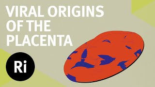 The Viral Origins of the Placenta