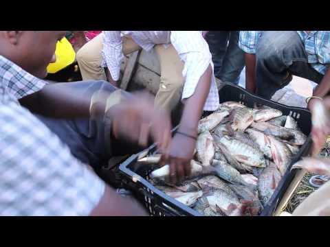 Lake Hawassa Fish Market, Hawassa City, Ethiopia