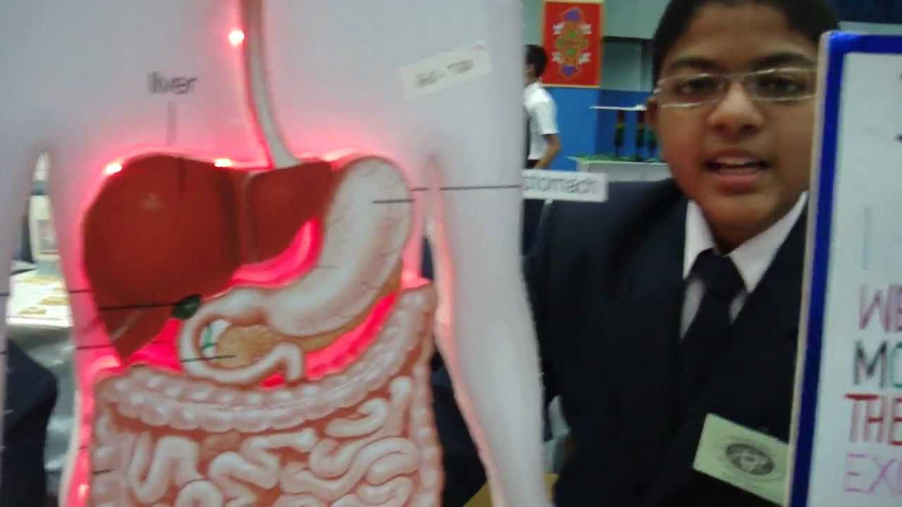 Digestive System By Shaoor Ansari And