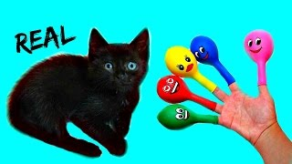 Animals Finger Family Song with REAL CAT for Learning Colors - Baby Songs