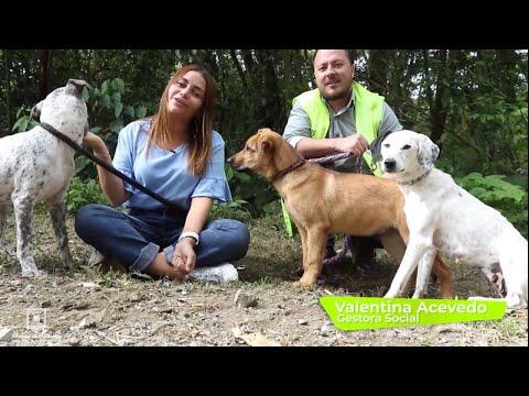 #AdopciónResponsable ¡Ellos quieren ser parte de tu familia! Y tú ¿quieres un compañero de vida?