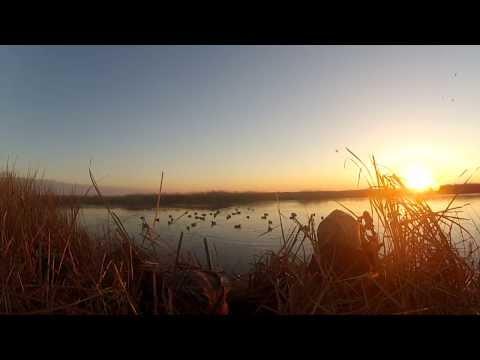 Duck Hunt South Dakota 2013