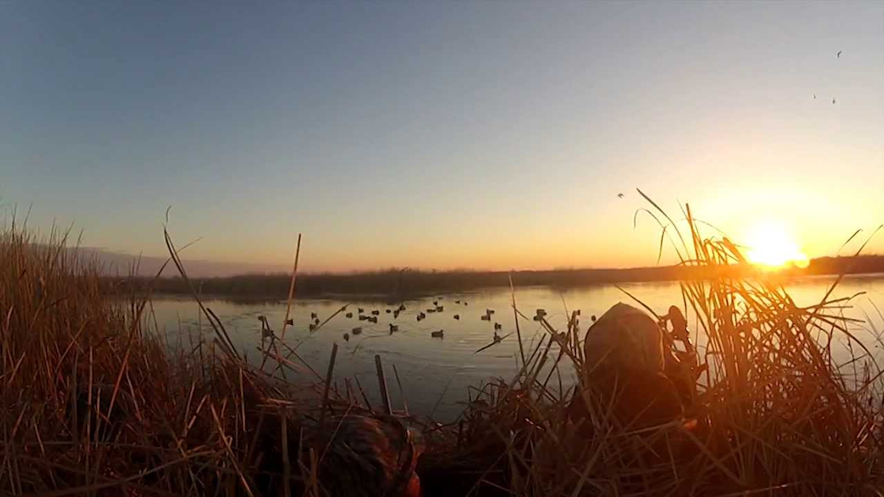 Fall With Water Wallpaper Duck Hunt South Dakota 2013 Youtube