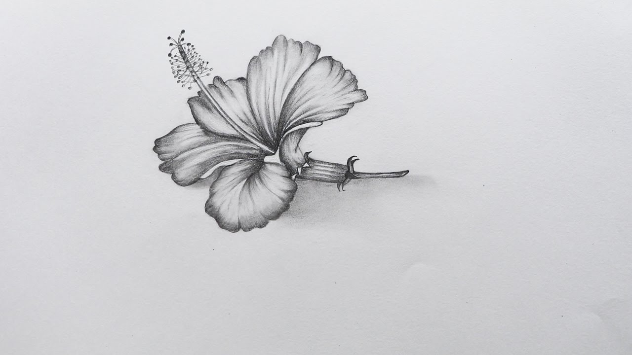 How To Sketch Hibiscus Flower Youtube