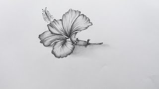 How to Sketch Hibiscus Flower
