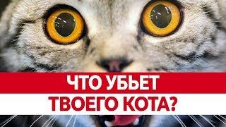 Вредная ЕДА ДЛЯ КОШЕК. Чем кормить кошку? Что нельзя кошкам?