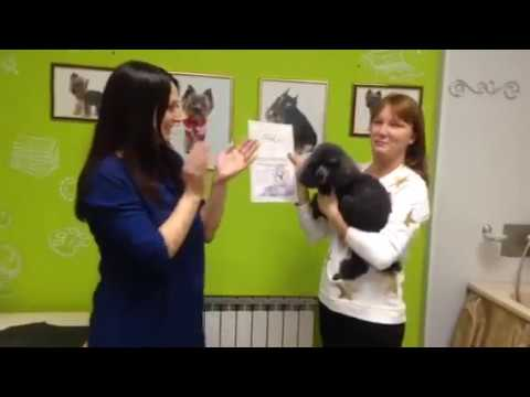 The practical grooming course in Russia in pet studio Matilda