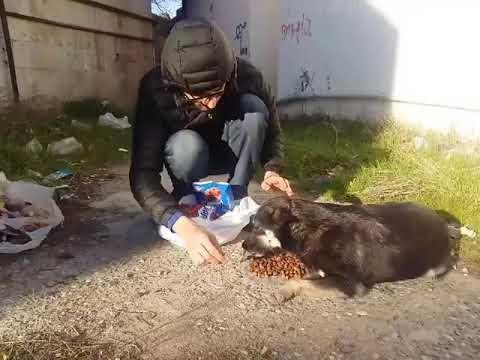 Игривая собачка жаль что ее щенят убили дети. 1 щенок выжил. в описании есть все способы помочь им