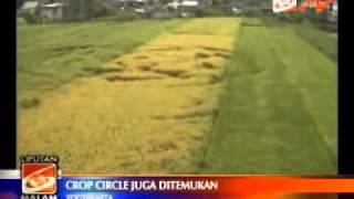 Wow..di Bantul Juga Ada Crop Circle!!!