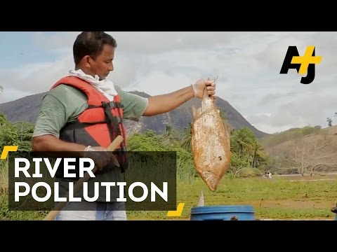 Brazil's Doce River Is Full Of Dead Fish