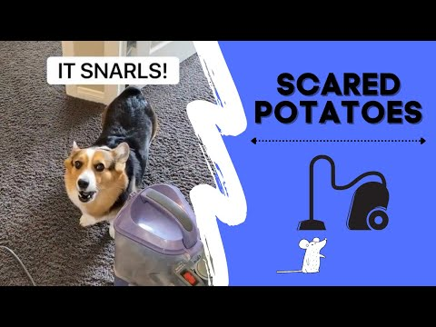 Dogs are Scared of Everything!