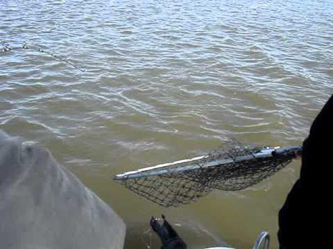 25lbs striper montezuma slu trolling youtube for Montezuma slough fishing report