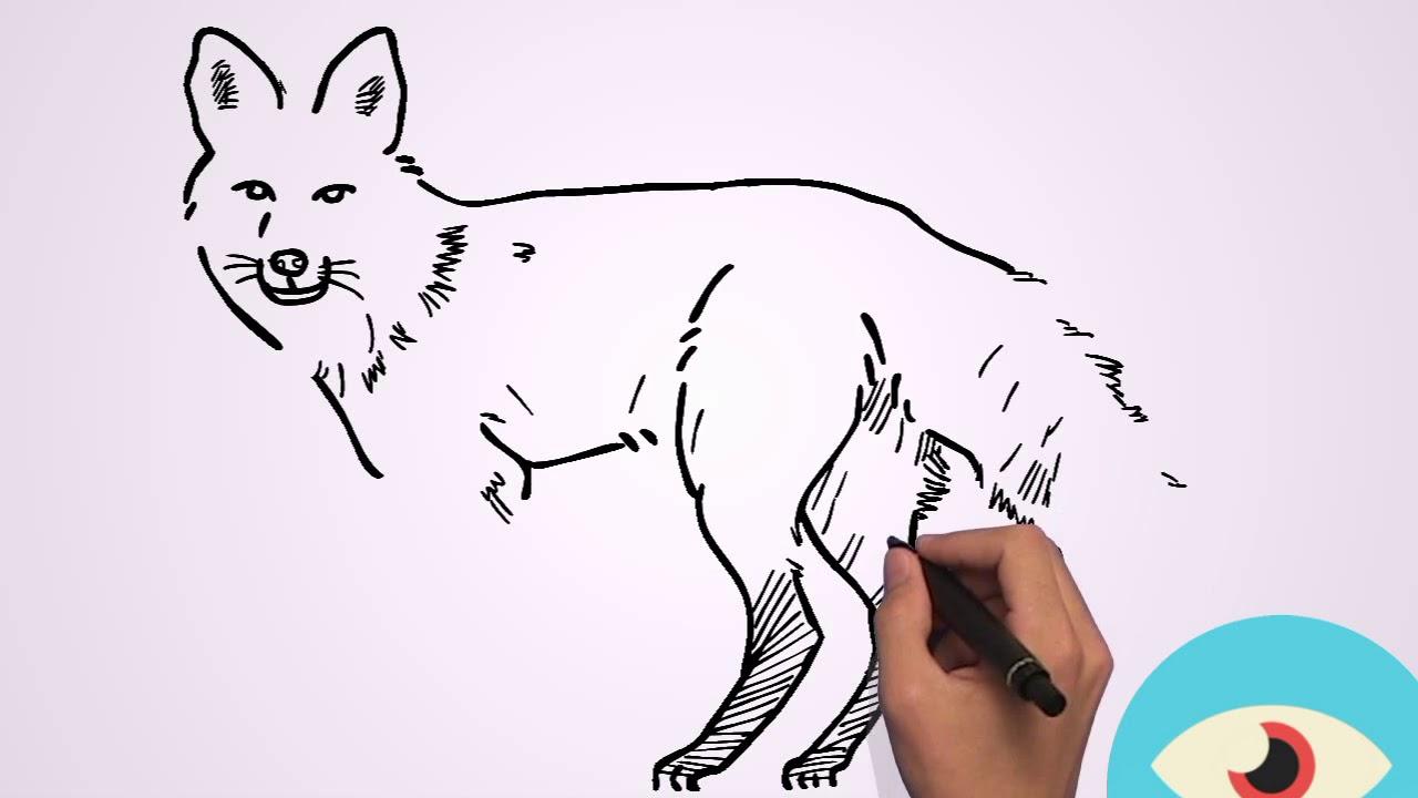 تعلم كيف ترسم الثعلب بطريقة سهلة جد ا Youtube