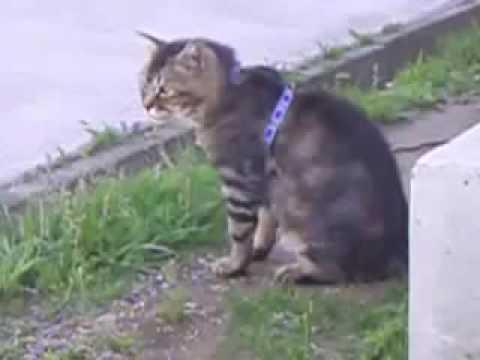猫パラダイス2 Funny cat videos2 이상한 고양이 동영상2 逗猫视频2   YouTube