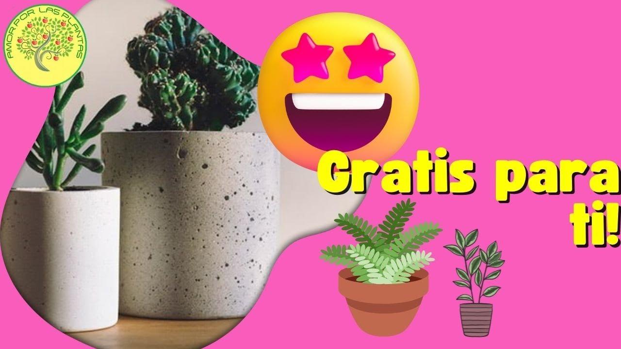 Como hacer una maceta con cemento youtube - Como hacer cemento ...