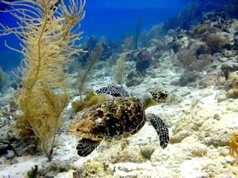 Sea Feather- Cayman Brac Vacation Rental.