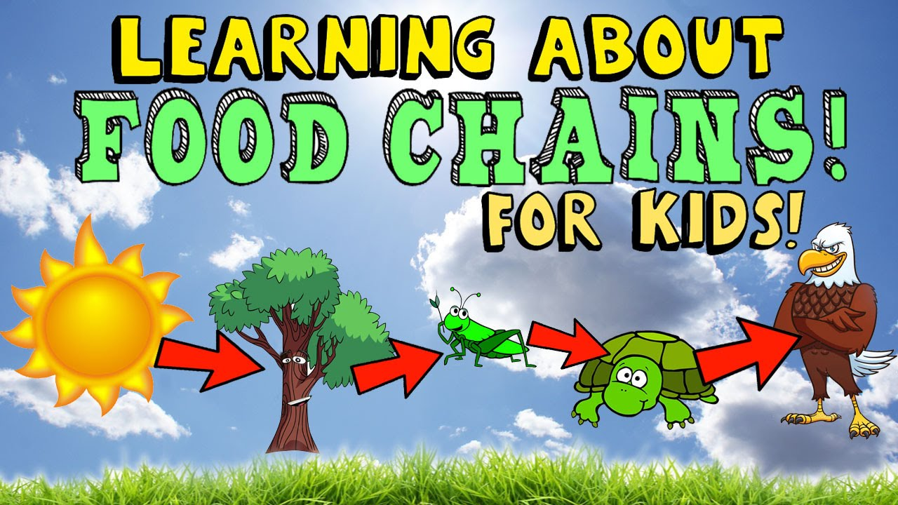 diagram of learning cycle 2008 nissan xterra stereo wiring about food chains - youtube