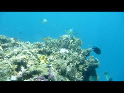 freediving coco loco island, philippines