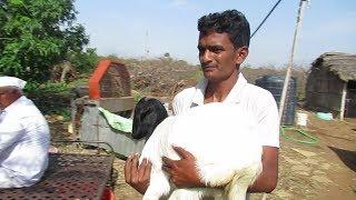 Suraj Devkar Goat Sales managment  गोट फार्मिंग सेल्स  मनगमेन्ट