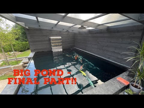BIG KOI POND BUILD PART 3!! FISH GOING IN!!! AND A PLEC??