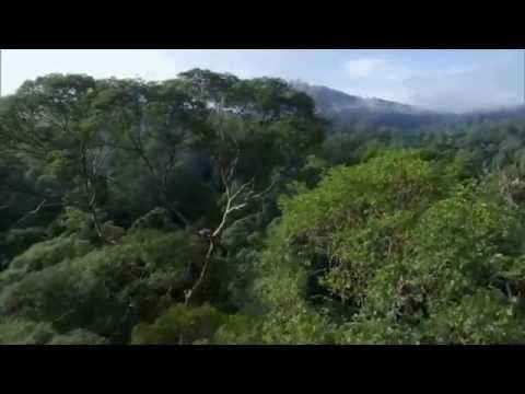 Խոսում է բնությունը - Ես անտառն եմ (Քեվին Սփեյսի / Kevin Spacey)