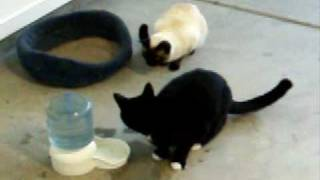 Funny Cats Playing With Water. :-)