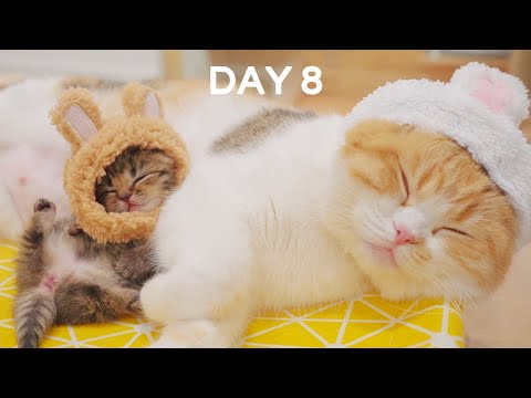Day 8 - Baby Kitten Wearing a Tiny Hat | Day 1 to Day 100 Kittens Grow Up Vlog