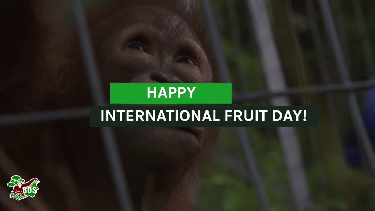 International Fruit Day!