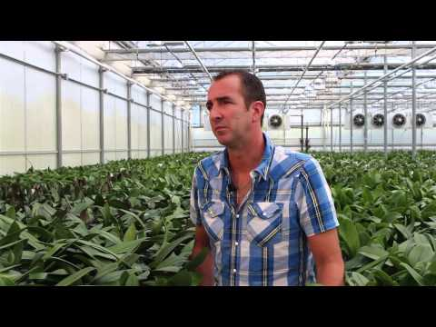 Cosmic Plants Virtual Tour