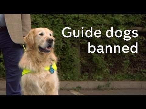 No Go Britain: guide dog users whose dogs are turned away