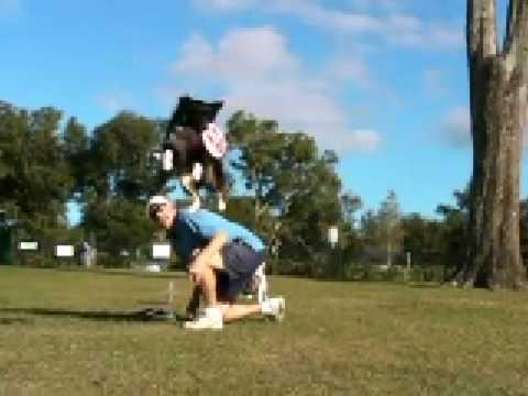 Ozzee the Aussie Slo-Mo Frisbee Tricks