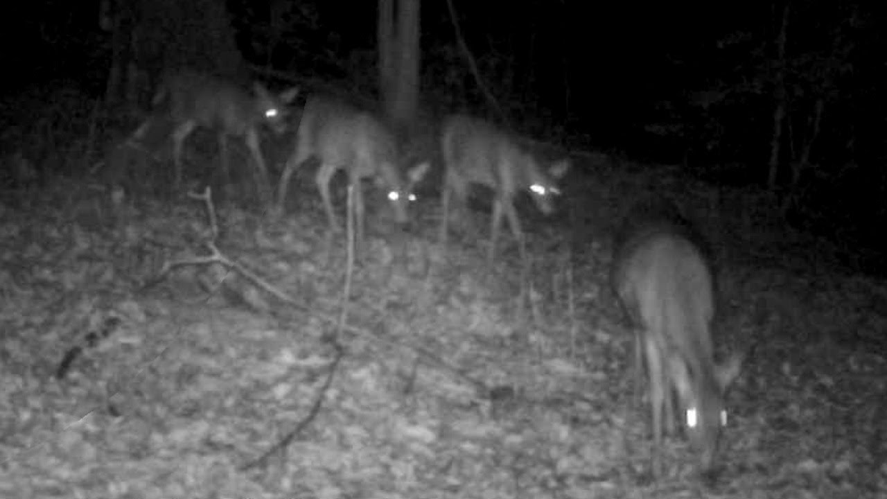 Missouri Trophy Whitetail Deer Hunting at High Adventure