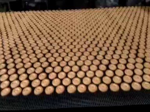 how to start a biscuit factory