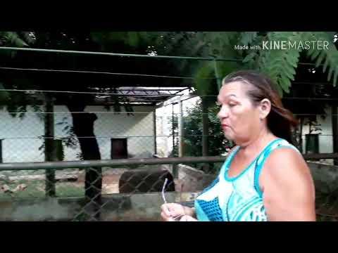 Zoológico cidade do Canindé. Ceará