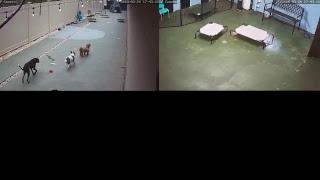 Barkmore Park Live Stream thumbnail