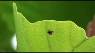 ムツトゲイセキグモの捕食行動2010年6月25日02.m2ts