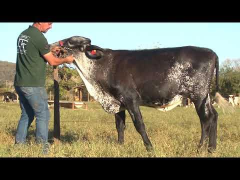 LOTE 38   LEILÃO JCRF   2530