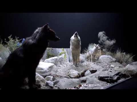 Teen Wolf - Cinco Motivos Para Assistir