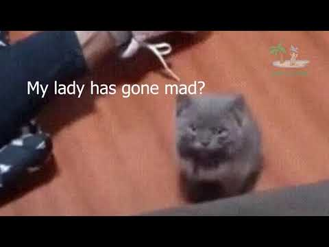 Funny Animals Videos will make you LAUGH 🤣 – Cute and Funny Animal Videos Compilation 🤣 Cafa Land#2