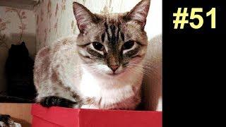 Как коты просрали все полимеры
