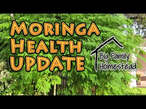 Moringa HEALTH Update