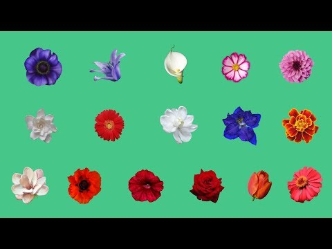 Spring Flowers Learning With Picture | BD Kids