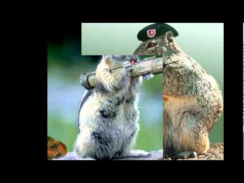 Funny animals with guns youtube - Pictures of funny animals with guns ...