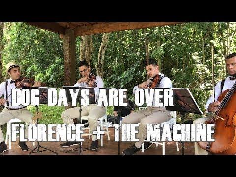 Dog Days Are Over - Florence + The Machine   Monte Cristo   Quarteto de Cordas Para Casamentos